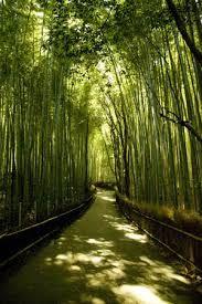 嵐山 竹林 -