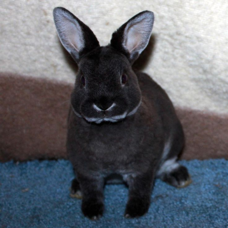 1000+ images about Bunnies on Pinterest