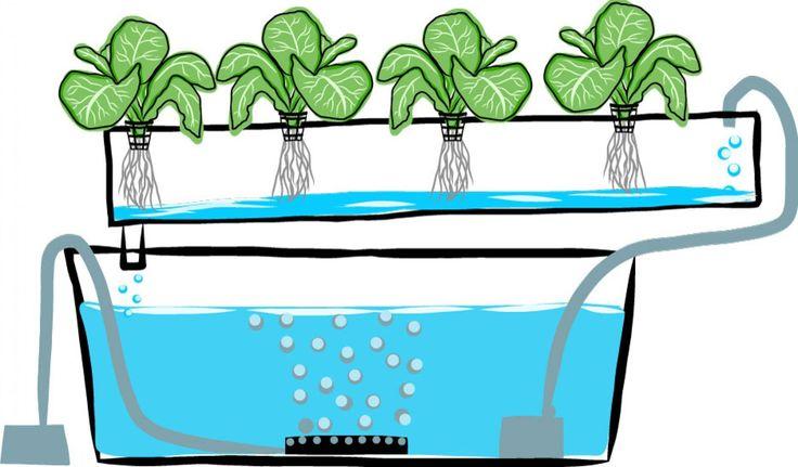 Hice mi cultivo hidropónico en casa y te lo muestro.