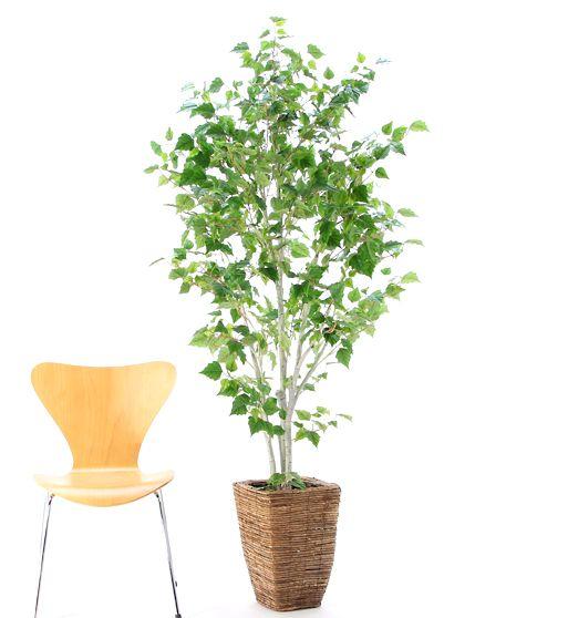 光触媒人工観葉樹 92512「白樺の木 190cm +バナナリーフバスケット(8号)」