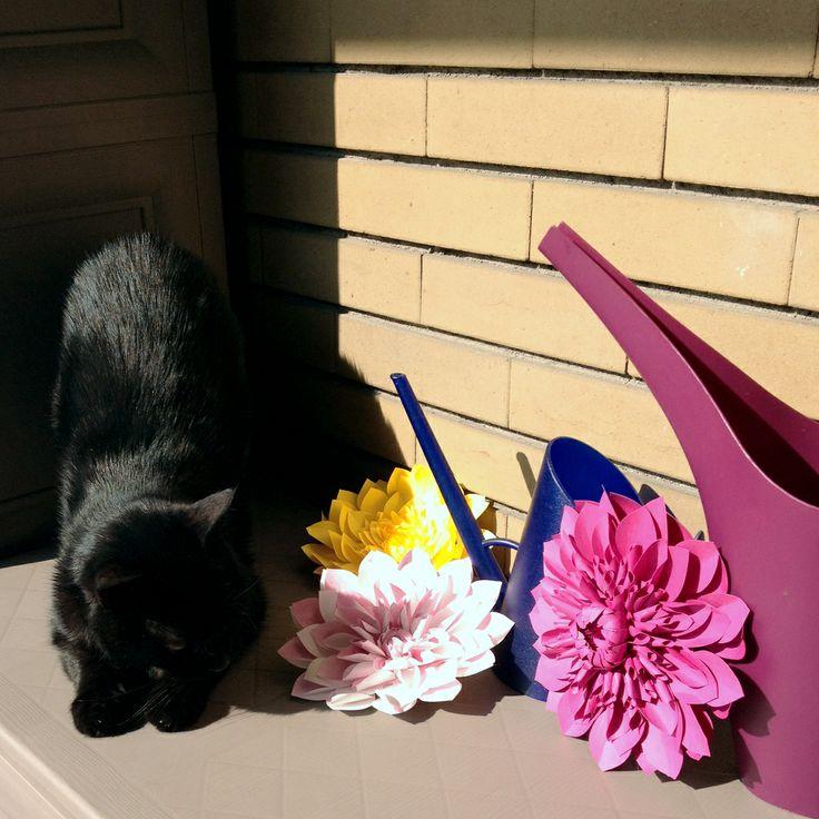 I tawt I taw a dahlia! - Non capifco, ftavo qui a fare un fonnellino, fono arrivati tutti quefti fiori... fembrano dalie, fono belle, però - #paper #flowers #flower #paperflowers #dahlia #dahlias #handcraft #cat #cats