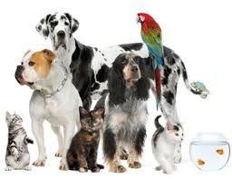 CORSO OPERATORE BENESSERE ANIMALI DOMESTICI - PET SITTER  Corso biennale - Frequenza 1 volta a settimana - Disponibilità 30 posti - € 490,00 annui