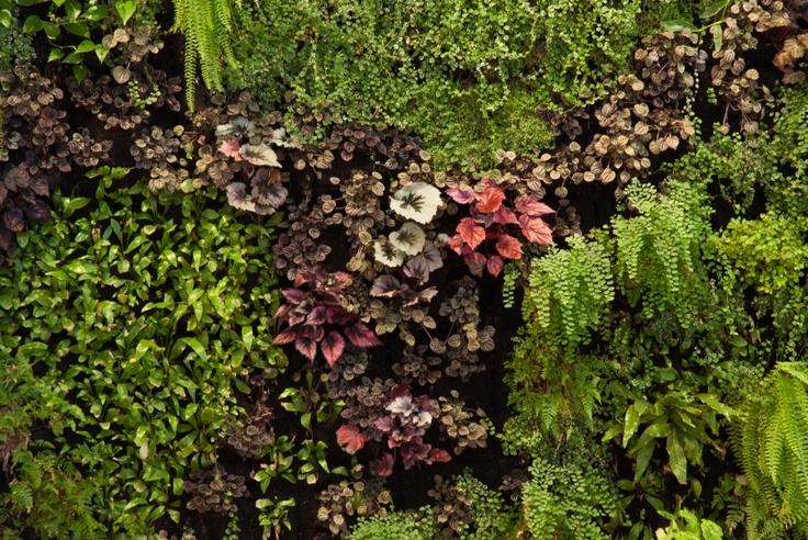 Manier vertikális kert, fotó: Bognár Péter