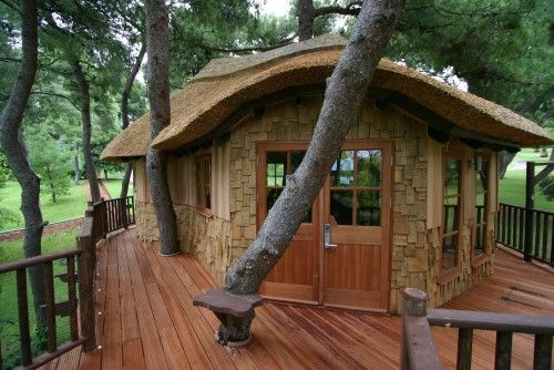 The client wanted to build a large tree house with enough space to include a kitchen, a washroom and a living area