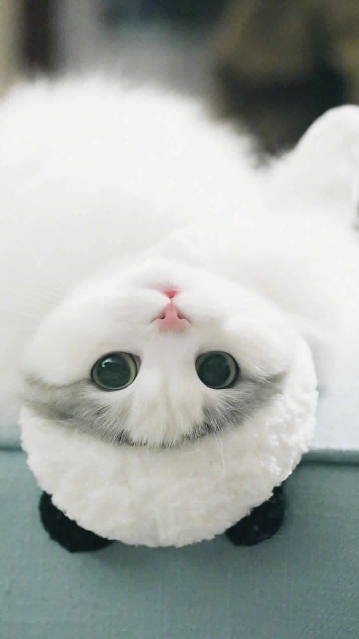 Cat Pinterest Carriefiter 90s Fashion Street Wear Street Style Photography Style Hipster Vintage Design Land Kittens Cutest Cute Baby Cats Cute Animals