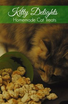 DIY Pet Recipes For Treats and Food - Kitty Delight Homemade Cat Treats - Dogs, Cats and Puppies Will Love These Homemade Products and Healthy Recipe Ideas - Peanut Butter, Gluten Free, Grain Free - How To Make Home made Dog and Cat Food - http://diyjoy.com/diy-pet-recipes-food