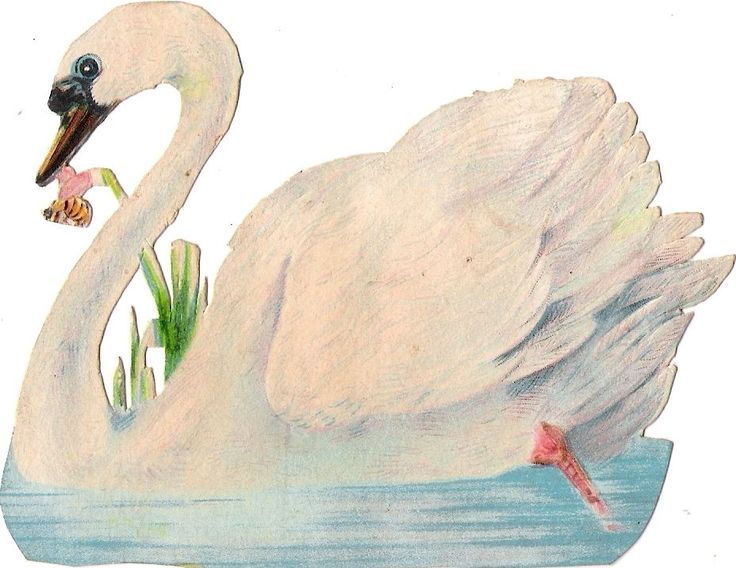 Oblaten Glanzbild scrap die cut  chromo Schwan swan 12cm