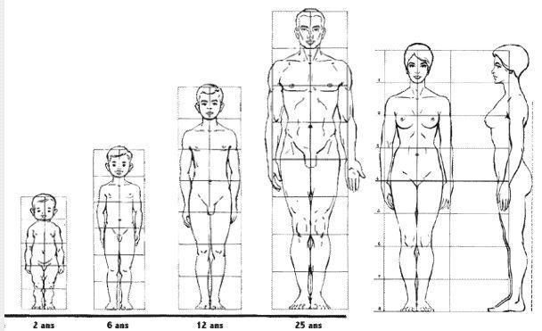 "Canon du corps humain ""8 têtes"""