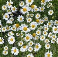 Best Natural Herbs for arthritis pain ~ BLOGOSOME