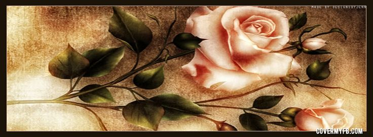 Beautiful Rose Facebook Covers, Beautiful Rose FB Covers, Beautiful Rose Facebook Timeline Covers, Beautiful Rose Facebook Cover Images
