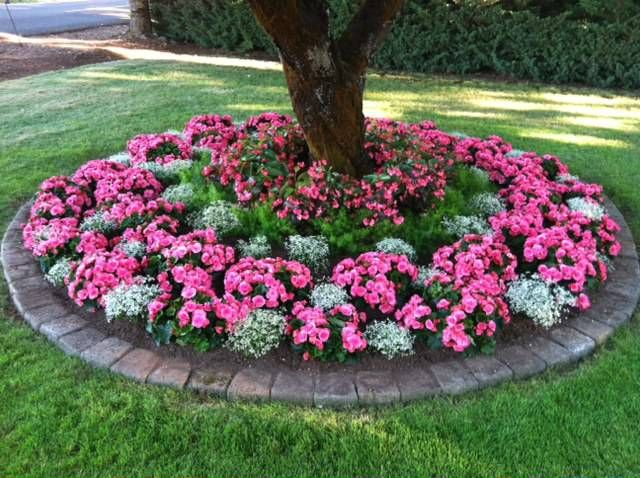 Flower bed around tree small back yard pinterest for Front yard flower bed ideas