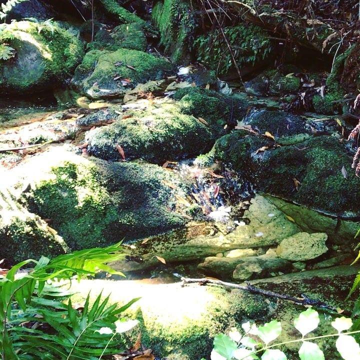 "2 Likes, 1 Comments - Andrew Aveley (@andrewaveley) on Instagram: ""A river runs through the forest  #knysna #gardenroute #river #stream #moss #igrsknysna #ig_africa…"""