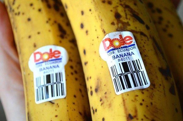 Les effets des aliments génétiquement modifiés sur le corps humain n'ont jamais été scientifiquement prouvés - mais 80% de nos aliments emballés contiennent de l'ADN manipulé.Les aliments génétiquement modifiés ne sont pas étiquetés comme tels, ce qui...