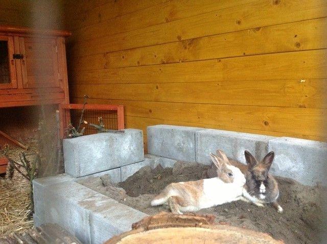 die besten 25 kaninchen forum ideen auf pinterest kaninchenhaltung kanninchenstall und. Black Bedroom Furniture Sets. Home Design Ideas