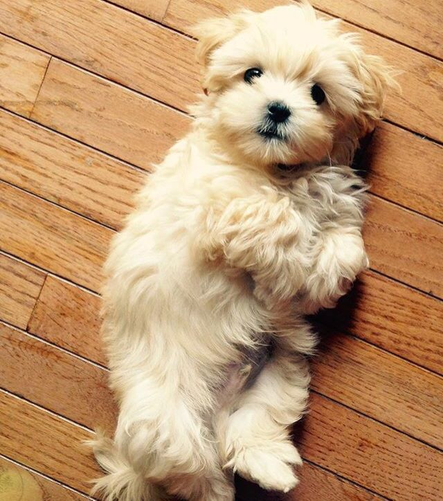 I'd love a dog like this cutie one day!
