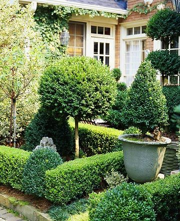 .English boxwood pruned in several ways. The tidiness of this always calls to me. Notice the interesting levels here, shapes. I give this a blue ribbon.