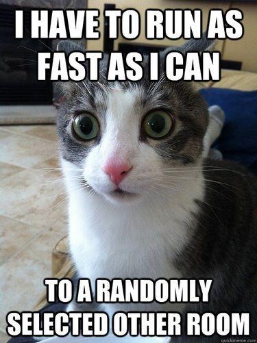 my cat hahaha