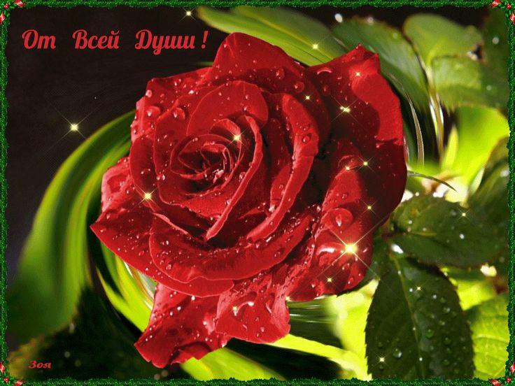 роза-бард