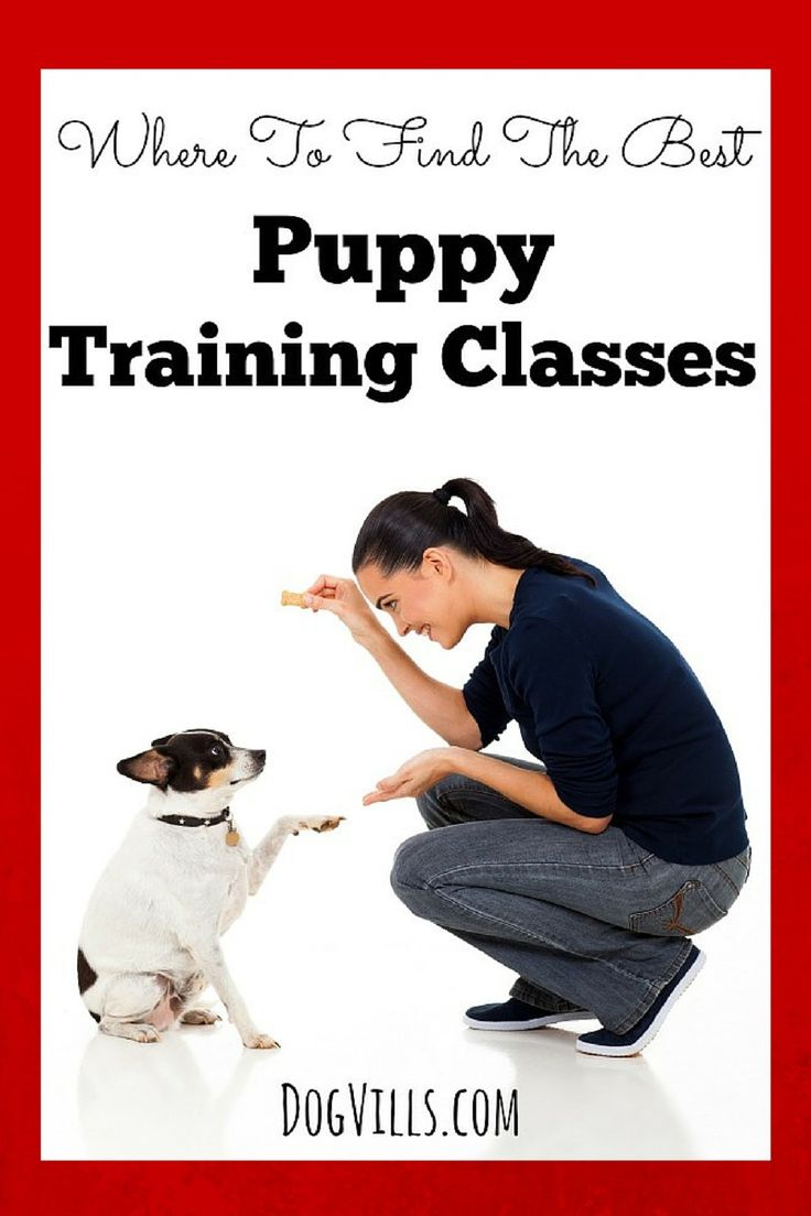 Your family has adopted a precious puppy and now it is time to start thinking about Where To Find The Best Puppy Training Classes