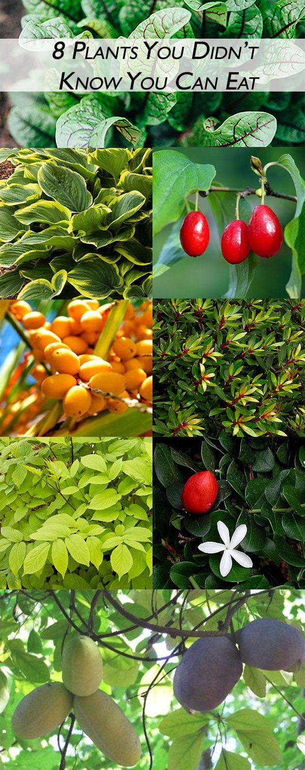 127 best edible plants images on pinterest edible plants plant