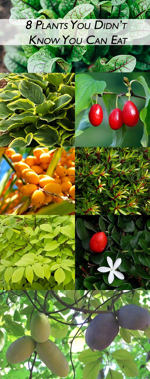 126 Best Images About Edible Plants On Pinterest Edible 400 x 300