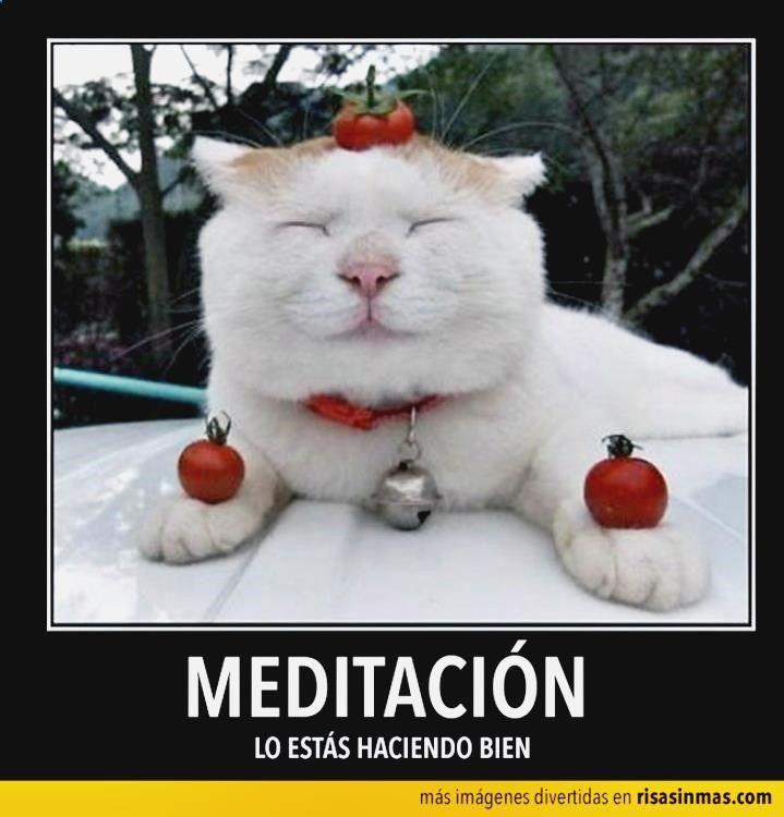 #(@_@)# Ríete con chistes audio, imagenes graciosas gif, chistes de jaimito groseros videos, memes de xbox one en español y gifs funny or die. ➫➬➫ http://www.diverint.com/memes-graciosos-via-muerta/