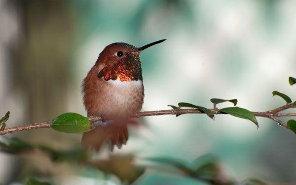 Como fazer cadastro no Ibama para criar pássaros