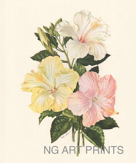 Antique Hibiscus Flower Print, Vintage Flower Print, Large Botanical Print, Oversized Botanical Wall Art, Wall Hanging