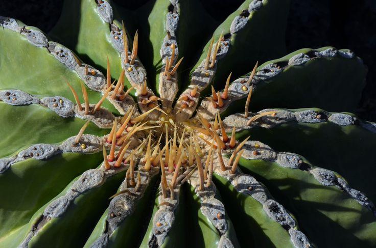 Love nature, cactus, life. Copyright.