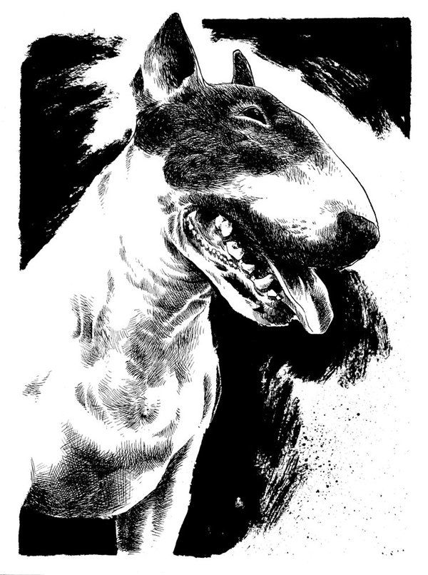Bella Luna the #Bullterrier by B3NN3TT on @deviantART