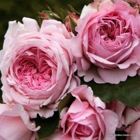 die besten 25 rosa nelken ideen auf pinterest vase mit nelke kleines m dchen herzst cke und. Black Bedroom Furniture Sets. Home Design Ideas