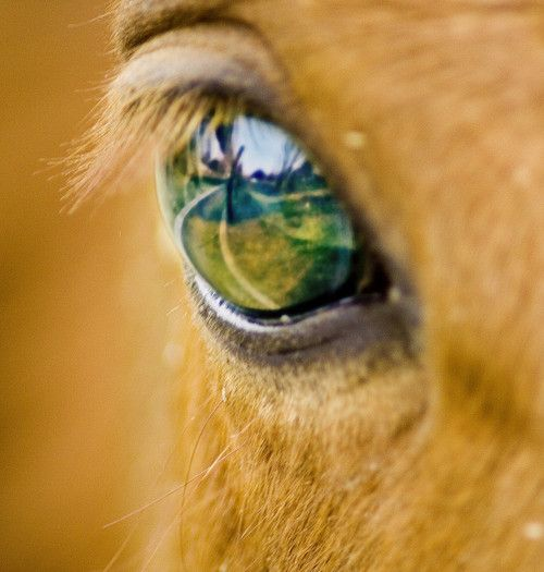 Horse eyes are so pretty! I know, I know. I said this a couple days ago... so what? :)