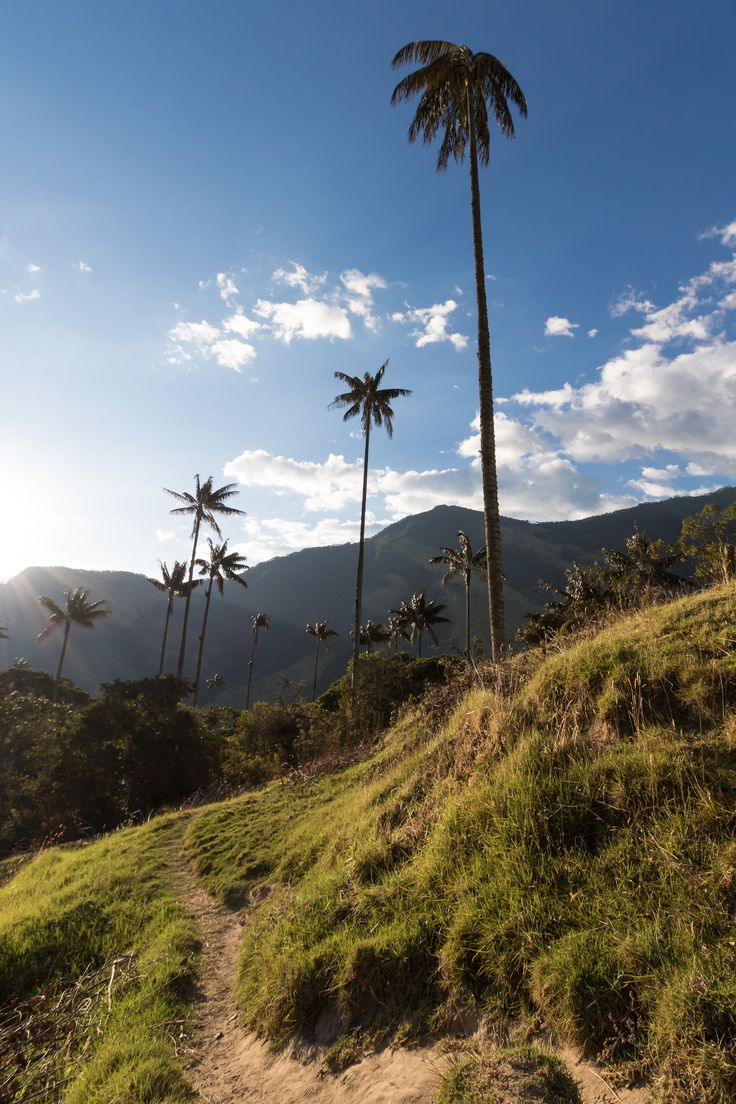 https://flic.kr/p/DBZQY2 | Valle de Cocora |  A view from the sun-kisses slopes of the Cocoa valley, so named after a Quimbayan princess. The wax palms stand guard over her, proud and tall, symbolizing the beauty of Colombia and the Andean region.   Recently I have challenged myself to shoot with Canon's most entry level lenses as a developmental exercise which will be the subject of an upcoming blog post.   To follow me on my photographic journey check out my blog at…