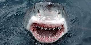Resultado de imagen de ataque tiburon blanco