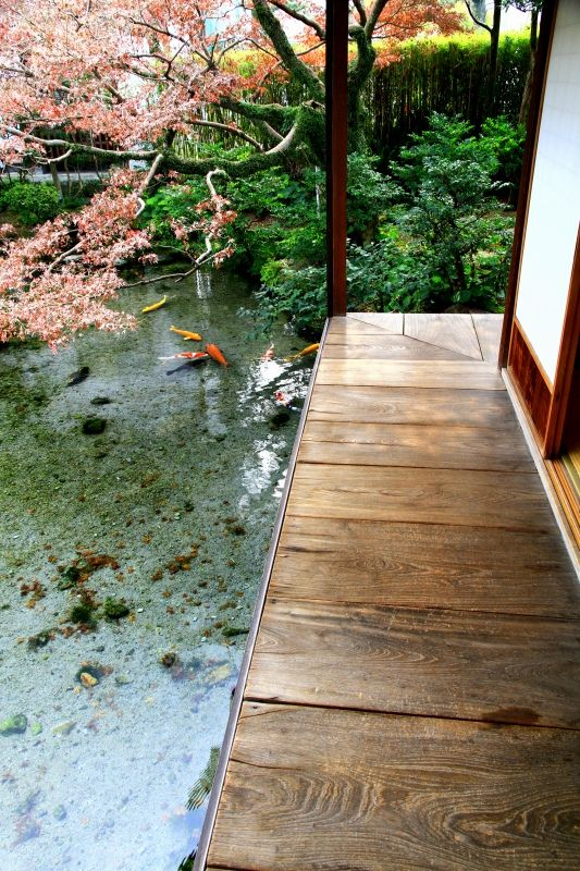 Japanese garden with koi pond, Shimabara, Nagasaki, Japan 涌水庭園 四明荘