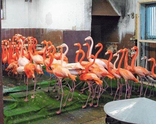 Flamingos in der Reithalle