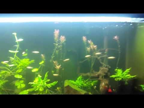 1000 images about aquaponics self cleaning aquarium on for Self sustaining fish tank