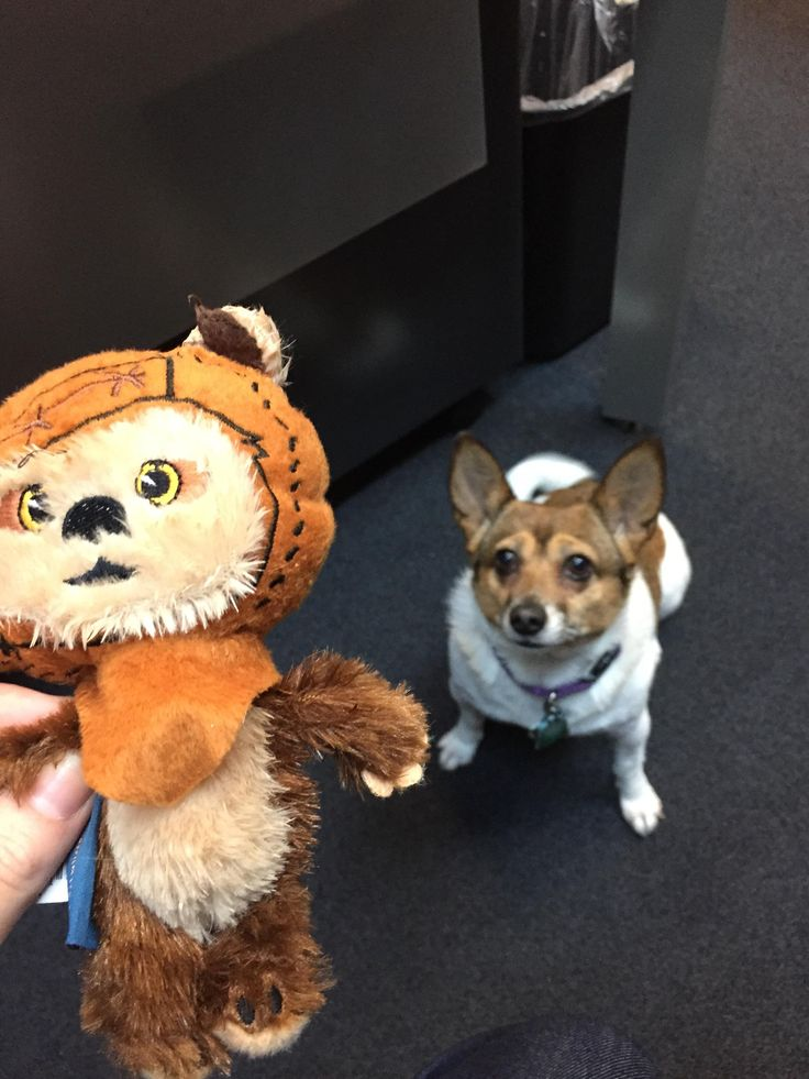 Chi Chi and the Ewok - #imgur
