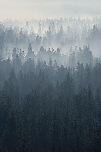 Le matin... en contre-jour. La vallée de mes rêves, sur les pas d'Ansel Adams (my master) Un peu de brume ou est-ce un feu de forêt ? Prise au 80/200 AIs... full manuel avec le D70.