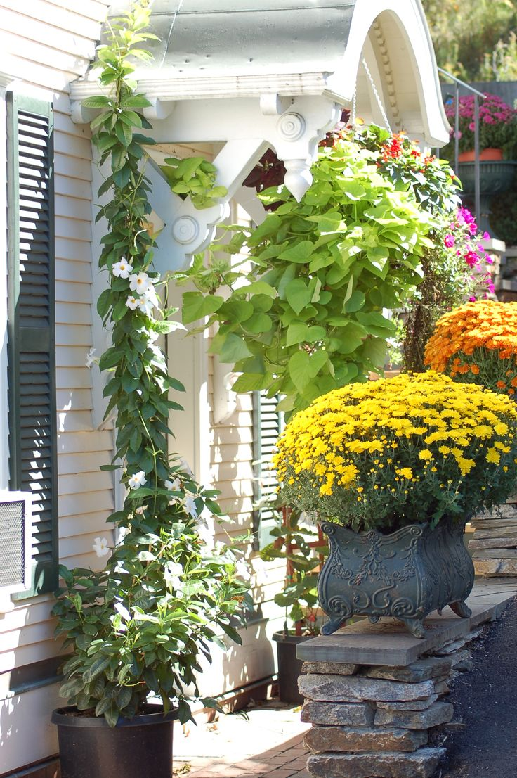 Best 25 front entry landscaping ideas that you will like for Front door garden ideas