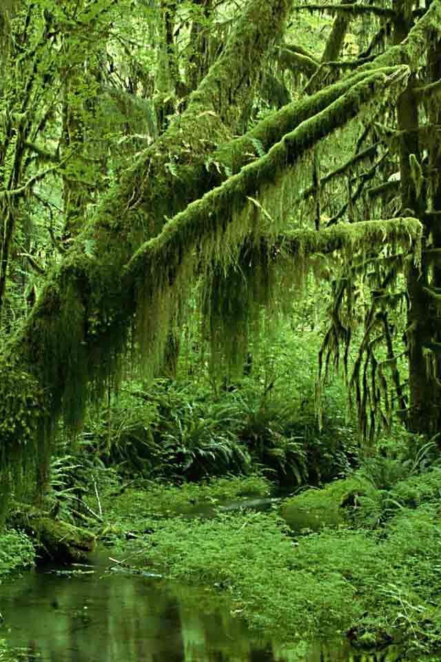 Parque Nacional de    Garajonay,  La Gomera,Spain, 1986 UNESCO lo declaro Patrimonio de la Humanidad,