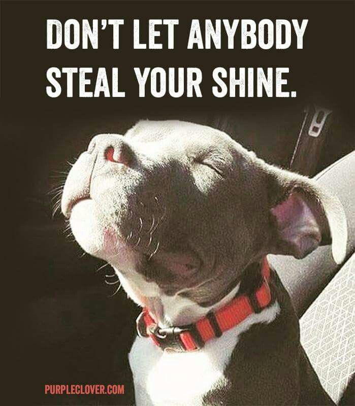 """Don't let Anybody steal your SHINE"", beautiful Pitt Bull Puppy Check This Out Doggies need this stuff! Dog Accessories:"
