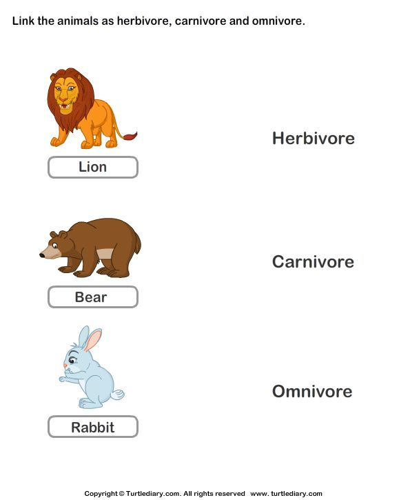 download and print turtle diary 39 s worksheet on herbivores carnivores omnivores worksheet our. Black Bedroom Furniture Sets. Home Design Ideas