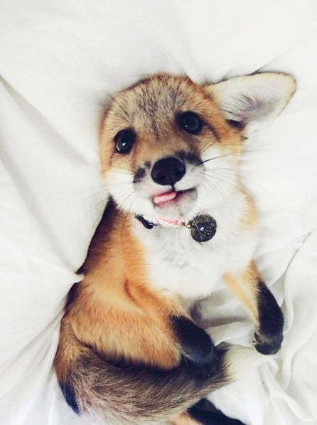 a lesson in facial expressions with juniper the fox on http://domino.com