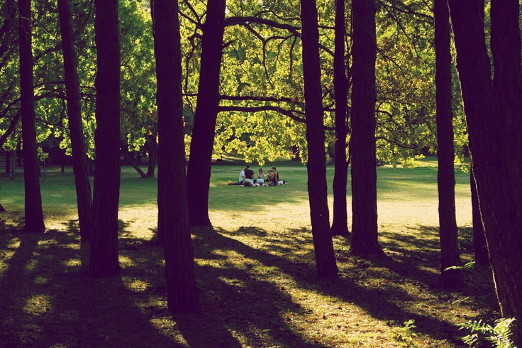 Meating in the clearing - Margaret Island, Budapest