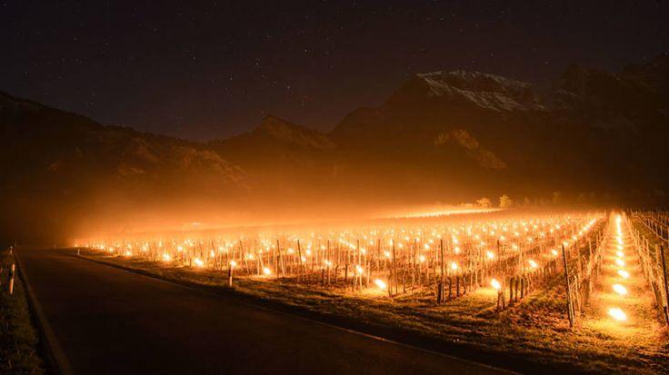 - Produtores de vinho utilizam velas nos vinhedos da cidade de Flaesch, na Suíça, para proteger as uvas da forte geada no local. Foto: Gian Ehrenzeller / AP