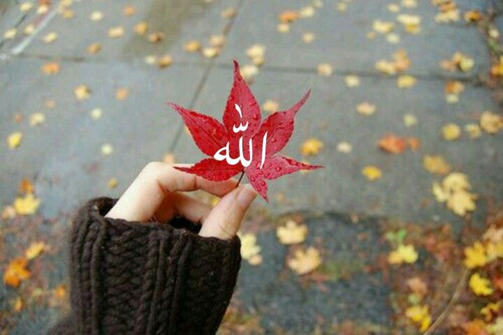 Pin Oleh Darya Di Allah Poster Bunga Mawar Cantik Bunga