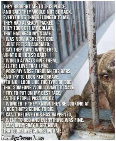 Shelter dog poem | Adopt a Pet - Why do people buy a dog if they can't love and care for it.