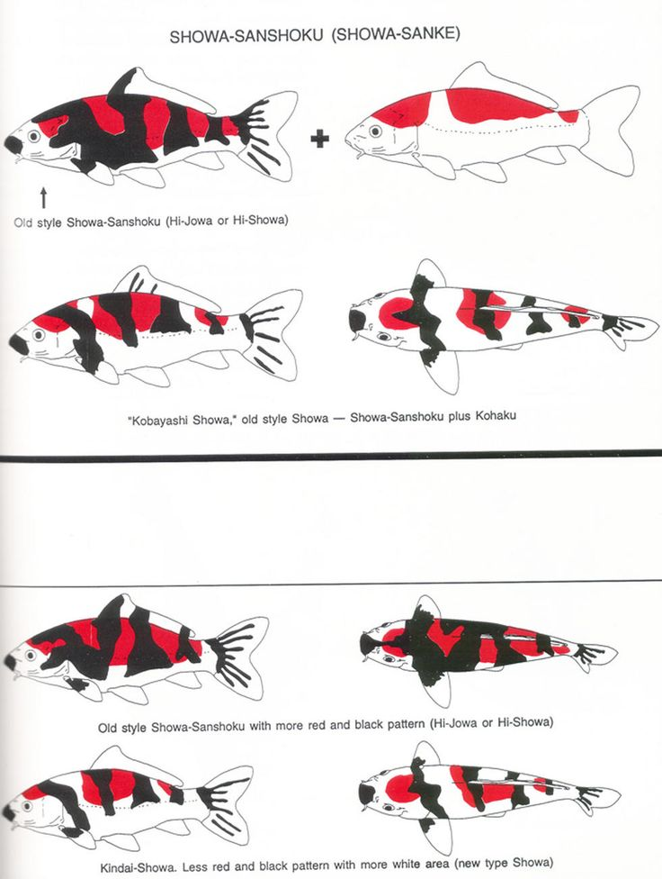 17 best best longfin koi images on pinterest butterfly for Koi fish color meaning chart