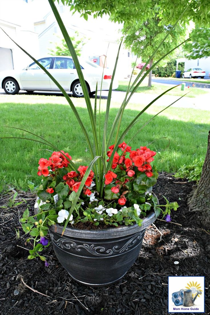 a shade planter garden with tall spike grass begonias violets and impatiens pinterest. Black Bedroom Furniture Sets. Home Design Ideas